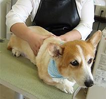 カルチャーセンター徳島1Day講座 愛犬の老いじたく