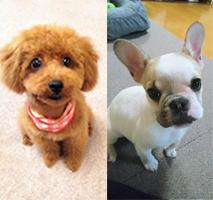 カルチャーセンター徳島1Day講座 犬のしつけ方教室