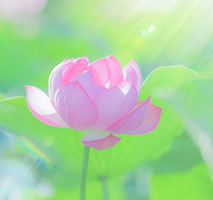瞑想入門(1DAY)