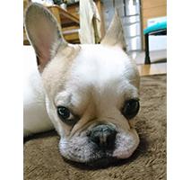 カルチャーセンター徳島1Day講座 ペット食育入門講座